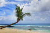 tropical beach - 215806811
