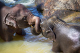 elephants swim in the river - 215808841