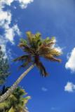 Tropical beach - 215826839
