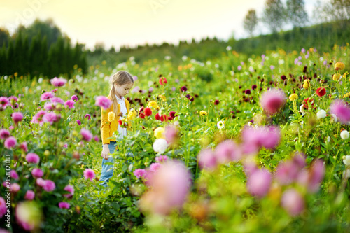 Leinwanddruck Bild Cute little girl playing in blossoming dahlia field. Child picking fresh flowers in dahlia meadow on sunny summer day.