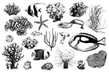 Hand drawn set of corals and coral fish inhabitants - 215834889