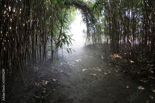 Aluminium Bamboe ascona isole brissago Insel in der Schweiz im Wald