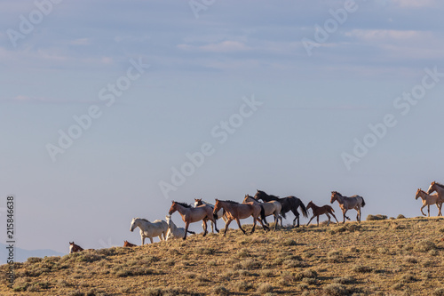 Canvas Kameel Herd of Wild Horses in Colorado
