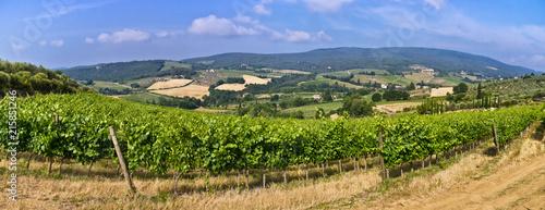 Fotobehang Toscane View on a San Geminiano vineyard, Tuscany - Italy