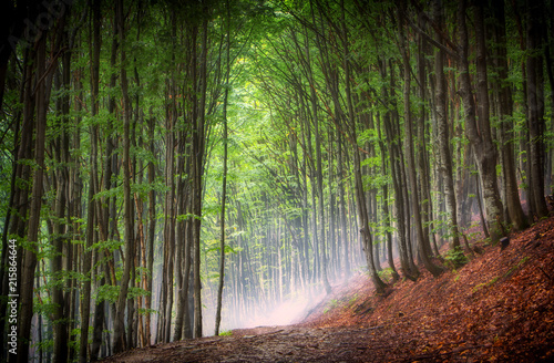 Canvas Betoverde Bos summer beech forest on the slopes of the mountains, Ukrainian Carpathians