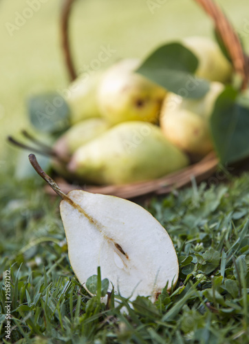 Ripe pears on the garden