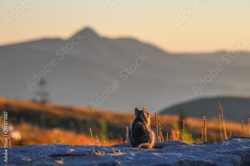 Fotobehang Beige Ground squirrel watching the sunset at Mount St. Helens National Volcanic Monument