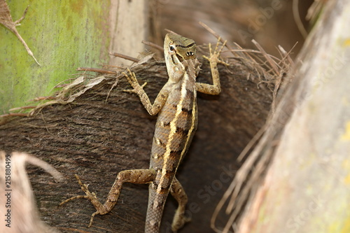 Plexiglas Kameleon Reptilien aus Sri Lanka