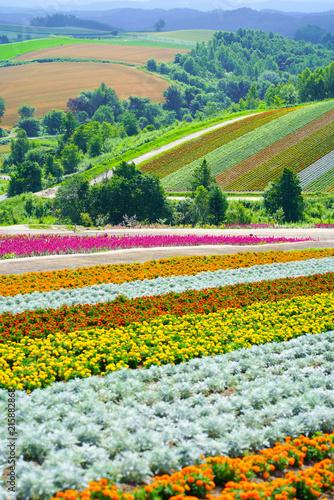 In de dag Tulpen 北海道の花畑