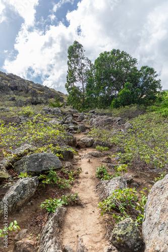Fotobehang Beige Ascension Island