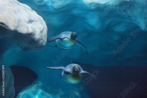 Canvas Pinguin Penguins swimming underwater