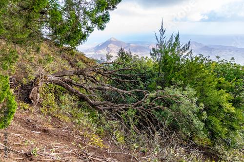 Foto Spatwand Zalm Ascension Island