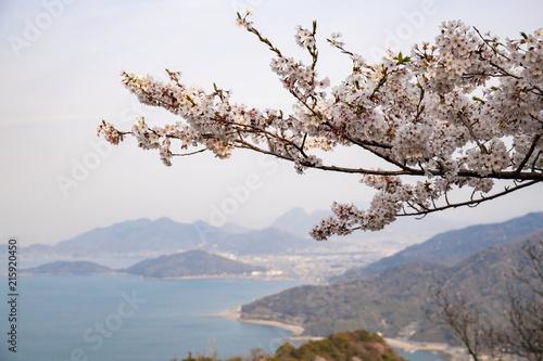 Canvas Lente Cherry blossoms and Islands in the Seto Inland Sea (spring haze),Kagawa,Shikoku,Japan