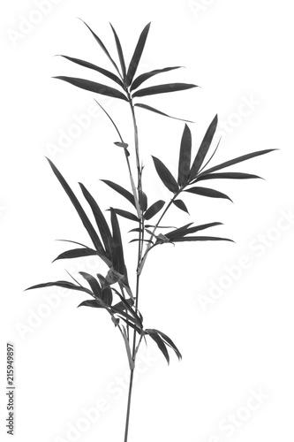 bambou en noir et blanc