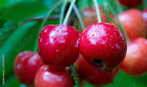 Foto Spatwand Kersen Makro aufnahme auf red cherries.