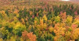 Big Canadian forest filmed in autumn during cloudy day. - 215980864
