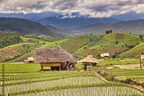 Canvas Pistache Reisfelder
