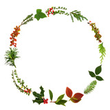 Winter and Christmas minimalist wreath garland with natural leaf sprigs, berries and plants on white background. Traditional christmas greeting card for the festive season.