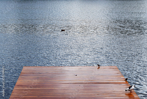 Acrylglas Pier Birds sit on a wooden pier by the sea. Rainy weather. Wooden platform by the river.