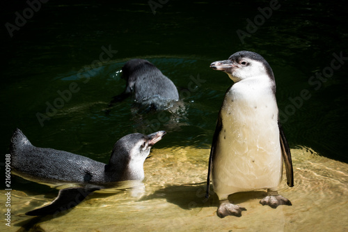 Canvas Pinguin Animal