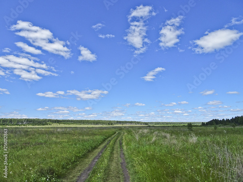 Canvas Zomer Summer landscape: a forest road among the fields on a sunny day under the sky with cirrus clouds