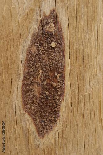 Foto Spatwand Koffiebonen texture