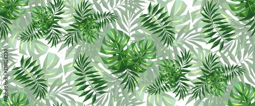 panoramiczne-liscie-palmy