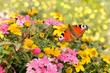 Leinwandbild Motiv Schmetterling 531