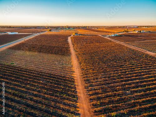 Foto Spatwand Chocoladebruin Rows of vines in South Australian vineyards in winter at sunset