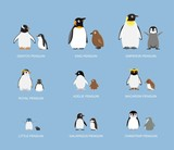 Penguin Babies Cartoon Emotion faces Vector Illustration - 216086834