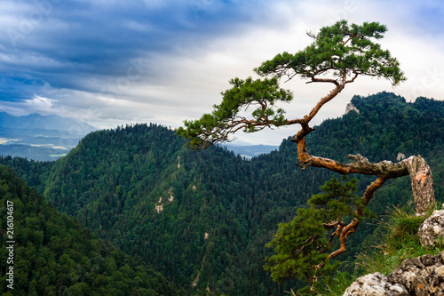 Sokolica peak in Pieniny mountains
