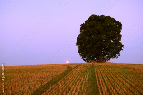 Aluminium Purper Moon and tree on the hill.
