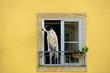 Leinwanddruck Bild - Dog at the window. Portugal