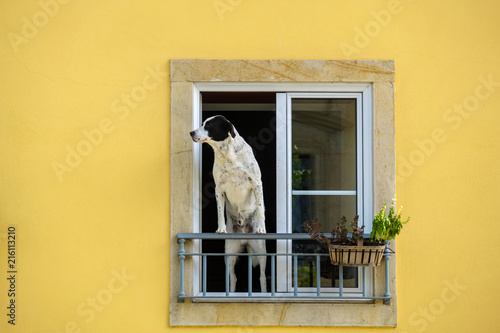 Leinwanddruck Bild Dog at the window. Portugal