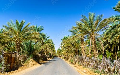 Leinwandbild Motiv Road in oasis at Tamacine, Algeria