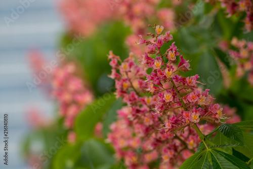 Foto Murales Pink and Orange Flowers Selective Focus