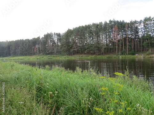 Foto Spatwand Olijf Forest. (The Vast Russia! Sergey, Bryansk.)