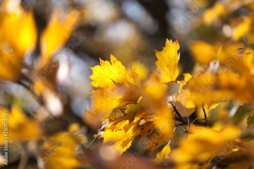 Canvas Oranje Autumn.