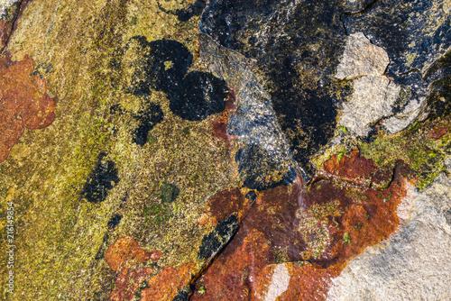 Algen, Moos und Steine / Kvalvika - Lofoten