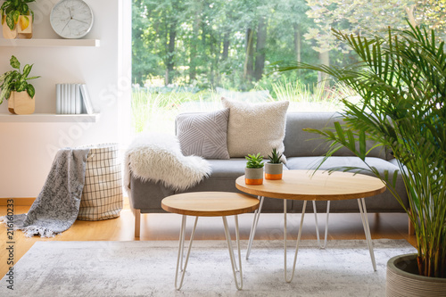 Wooden tables in front of grey sofa with cushions in scandi living room interior with plant. Real photo