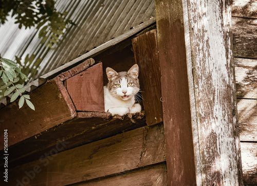 Cat under the roof.