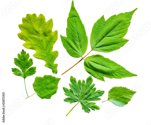 Leaves of the different trees.