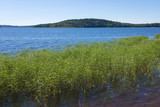The shore of the Ladoga lake in Russia with the cane in the water with the mountains and the forest on the skyline in the sunny summer day - 216177047