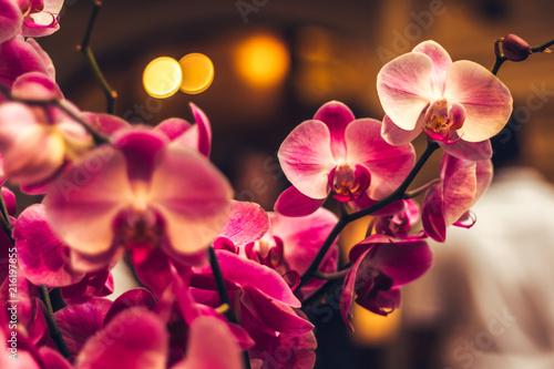 Красивые розовые орхидеи, цветы в Таиланде