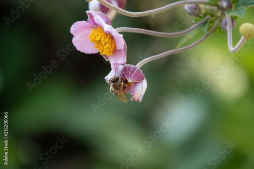 In de dag Bee Dragonfly Bee and Flowers