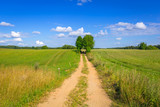 Idyllic summer meadow with single path in Poland - 216206837