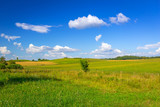 Idyllic summer meadow with green grass in Poland - 216206896