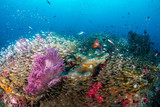 A healthy, colorful tropical coral reef full of marine life