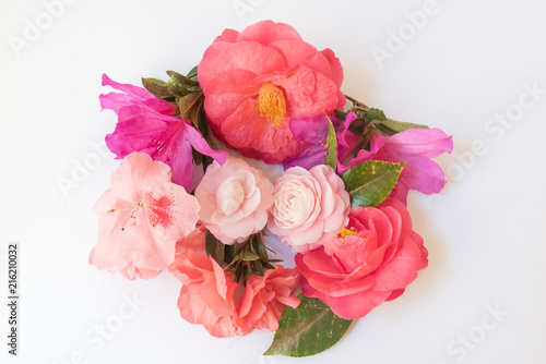 Canvas Azalea High angle view of pink camellias and azaleas arrange in a circle on white table - nature background (selective focus)