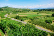 vineyard scenery at Ihringen Kaiserstuhl Germany